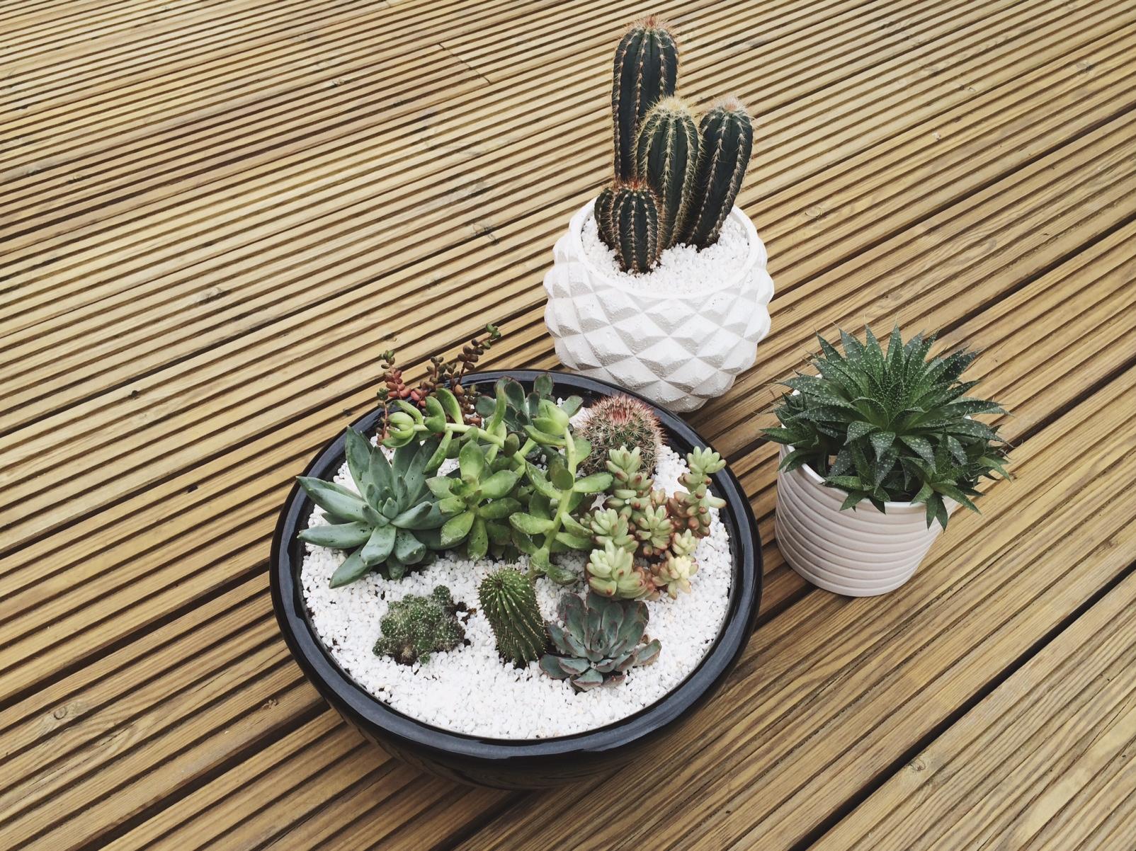 How to make an indoor succulent garden. |